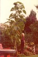 Groeneweg-Ronald-15-07-1975